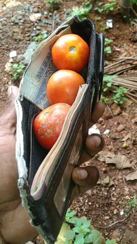 Tomatoes Costly